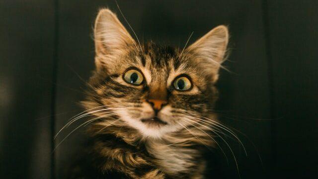 驚く猫の画像